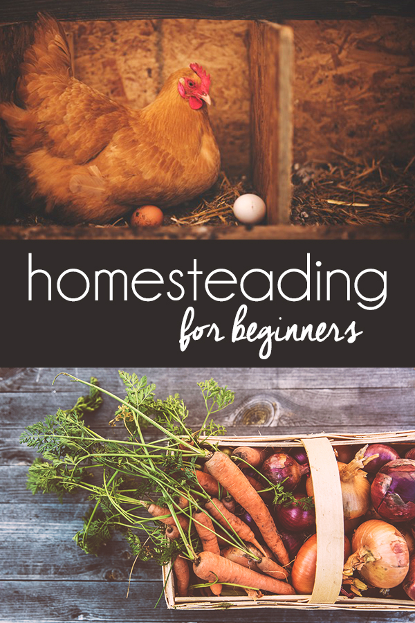 Homesteading for Beginners