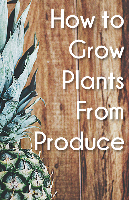 How to Grow Plants From Produce
