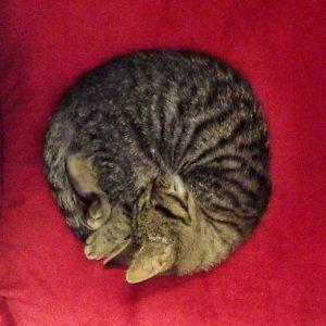 Kitty Ball
