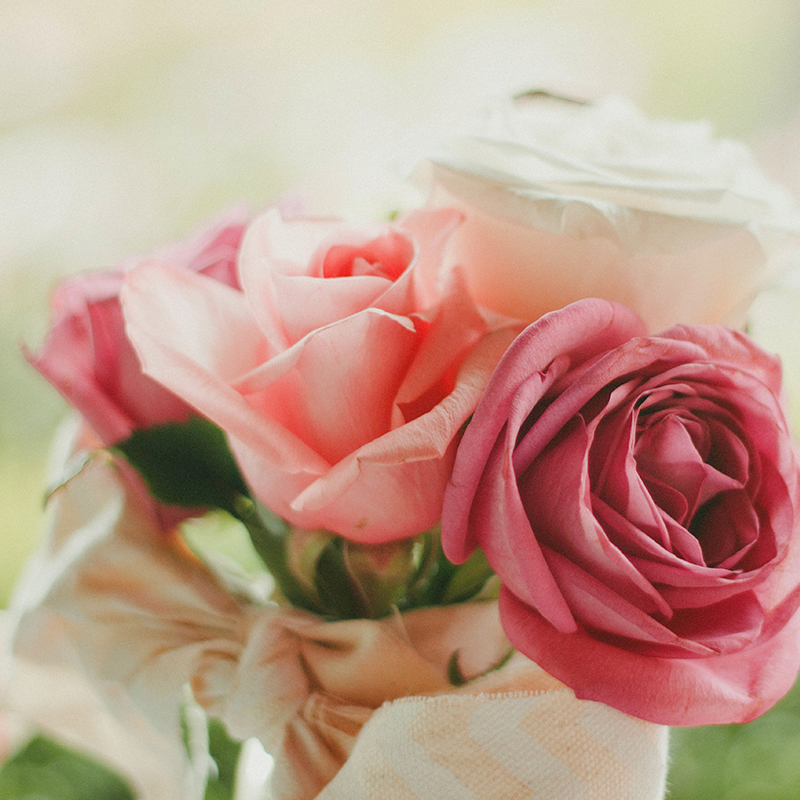 Where you buy your roses matters. All Kroger roses are Rainforest Alliance certified. Click through to learn more about #KrogerRoses